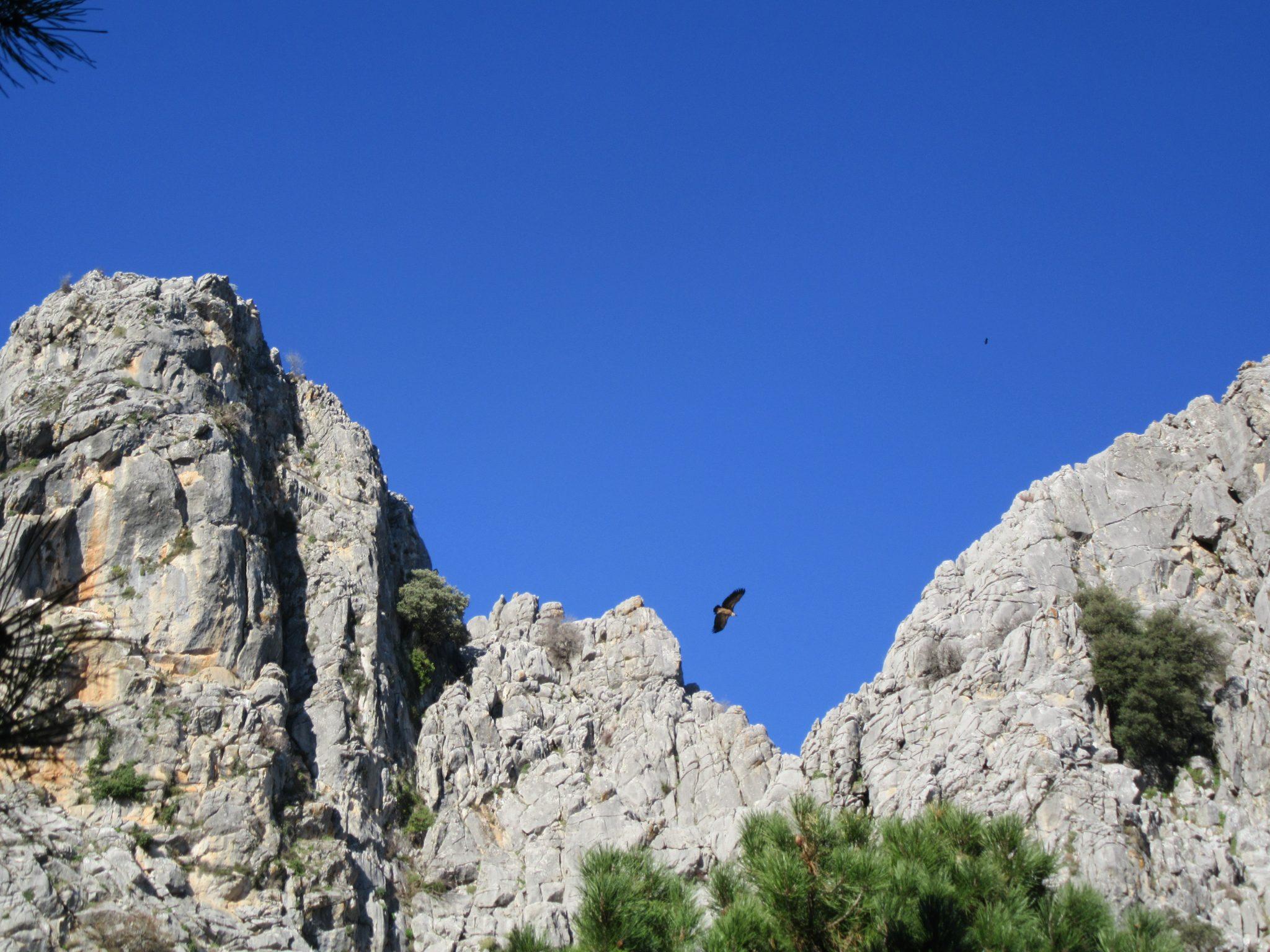 Birdlife Vultures nature great walking